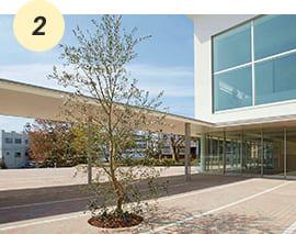 2019年新学舎「A館」完成を記念し植樹されたオリーブのシンボルツリー